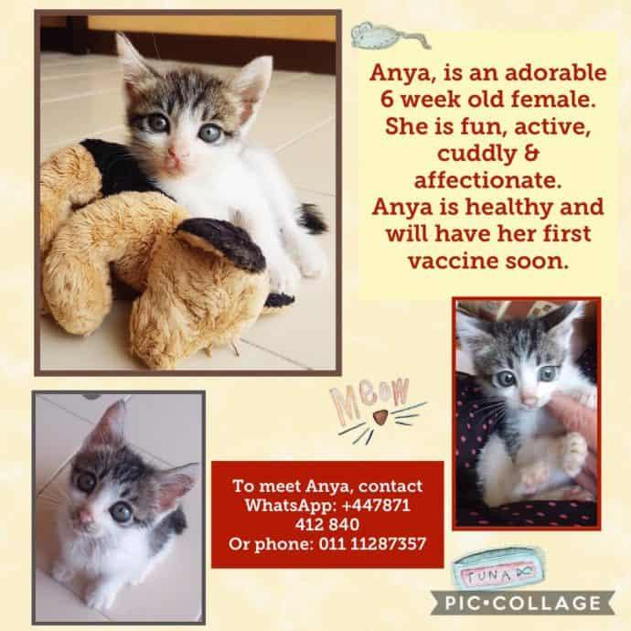 Adopt a Cat Penang