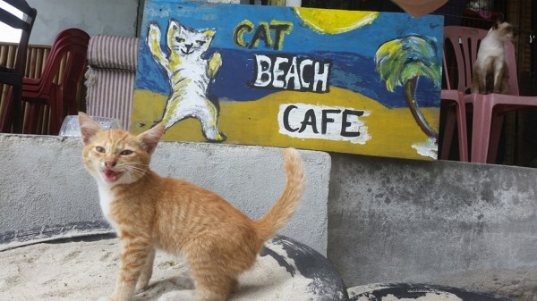 The Cafe Is Curly Closed Due To Storm Damage But We Can Always Offer You A Cuppa From Our Neighborhood Cafes Beachside Cat
